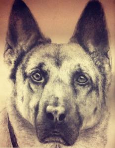 Bethany Alvarez Picture of Dog